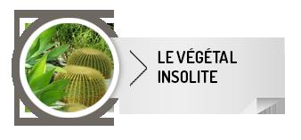 vegetal-insolite2
