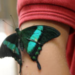 La serre aux papillons Crédit photo : Coralie Pilard