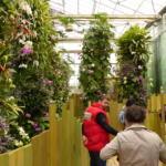 La serre aux orchidées Crédit photo : Terra Botanica