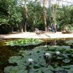Le Trésor de La Pérouse Crédit photo : Terra Botanica