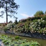 The Botanical Odyssey