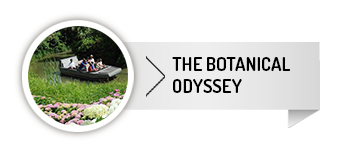 the botanical odyssey