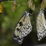 La serre aux papillons Crédit photo : Thierry Huguenin